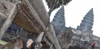 Angkor Wat ja apina