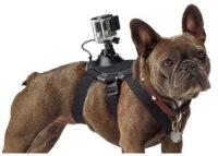 GoPro koira